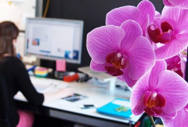 Orchidee, dahinter unscharf ein Bilschirmarbeitsplatz